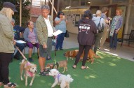 Blessing of the Animals in the courtyard.